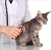 Ветеринарные клиники в Обояни